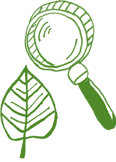 St Clare Group Early Education Leaf and Magnifying Glass